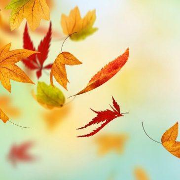 Herbstferien vom 20.10. – 01.11.